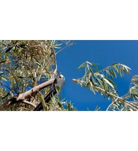 Treelion M45 Podadora...